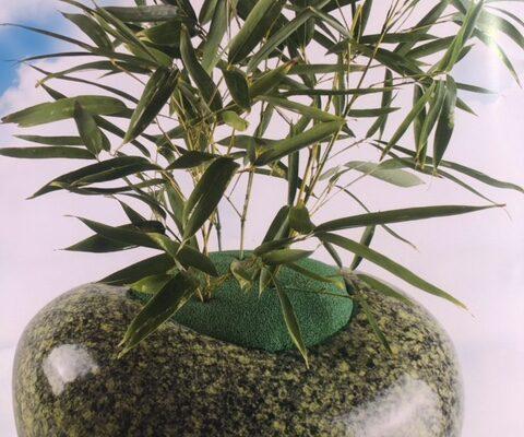 Urna pianta